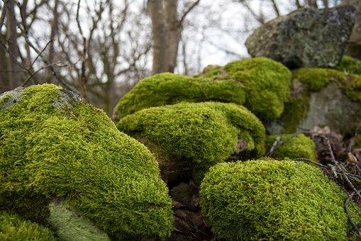 Grönmossa, Moss, Stones, Nature, The Lowest, Landscapes