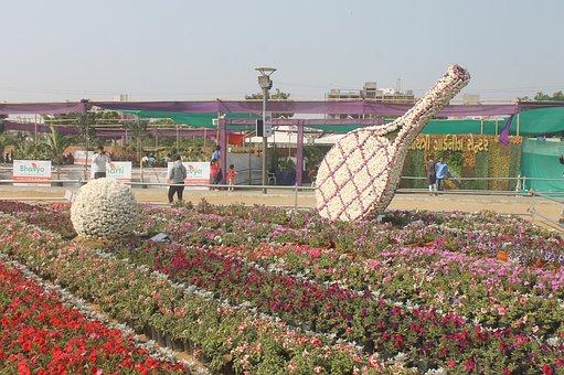 Flower, Exhibition, Ahmadabad, Gujarat, India, Gandhi