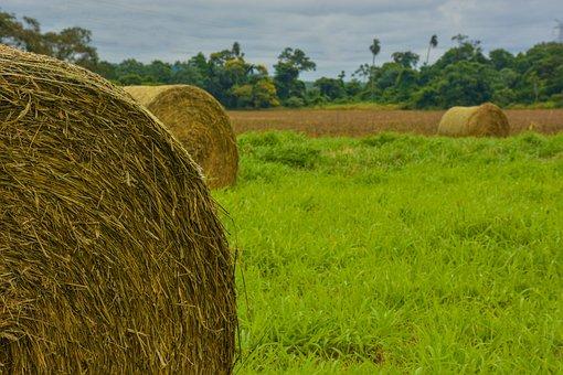 Grass, Hay, Field, Landscape