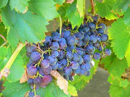 Grapes, Summer, Fruit, Healthy, Wine, Food, Nature
