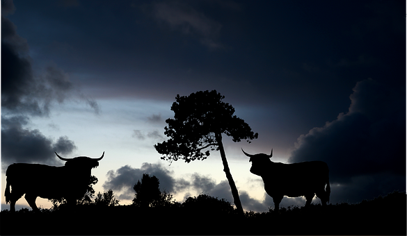 Night, Nature, Trees, Cows, Prairie, Sky
