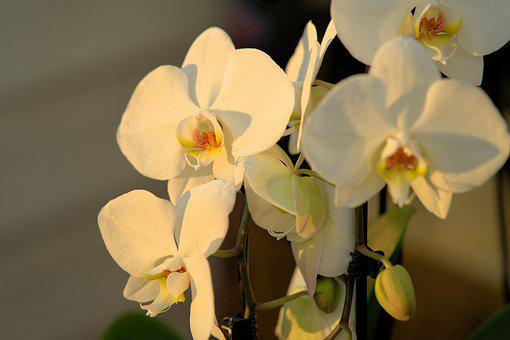 Orchid, Flower, Blossom, Bloom, Tropical, Spring, Flora