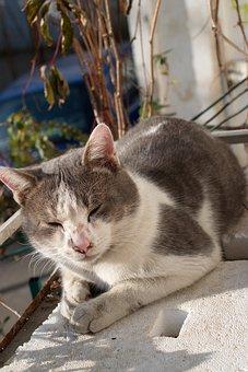 Cat, Tomcat, Pet, Feline, Fur, White, Gray, Placed