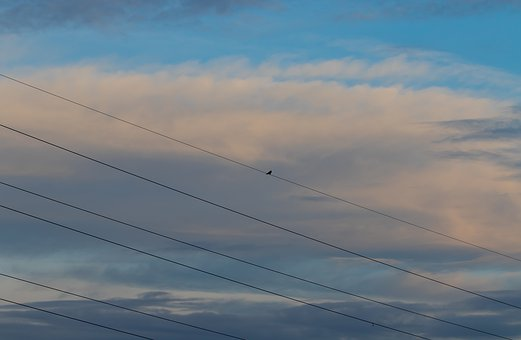 Bird On A Wire, Bird, Avian, Perch, Silhouette, Wire