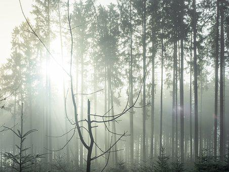 Forest, Fog, Sun, Nature, Trees