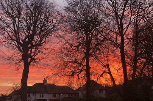 Sky, Red, Sunrise, Scenery, Trees