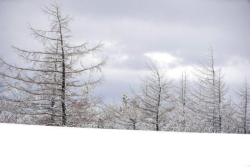 Snow, White, Winter, Ranch, Sheep, Tree, Cold Weather