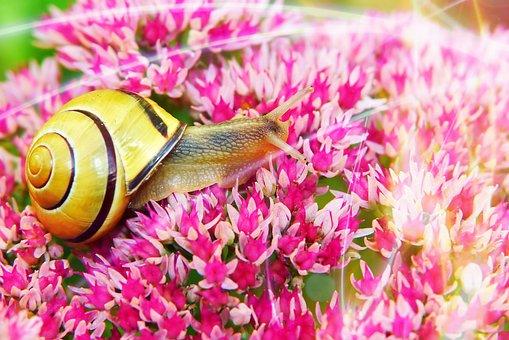 Wstężyk Huntsman, Snail, Flowers