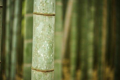 Bamboo, Bamboo Grove, Arashiyama, Kyoto