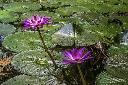 Flower, Flowers, Nature, Spring, Summer, Beauty, Zen