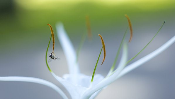 Bee, White, Nature, Bloom, Spring, Blossom, Insect