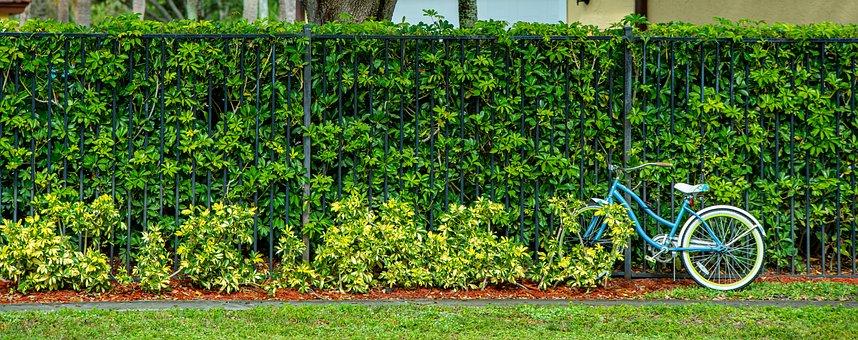 Bicycle, Fence, Hedge, Bike, Backyard, Grass, Nature