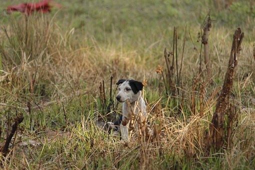 Dog, Cute Dog, Black, Animal, Looking, Doggy, Child Dog