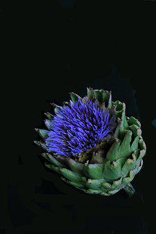 Artichoke, Blossom, Bloom, Vegetables, Plant, Edible
