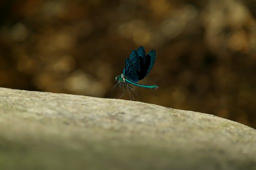Dragonfly, Blue, Insect, Insects, Nature, Wing, Close