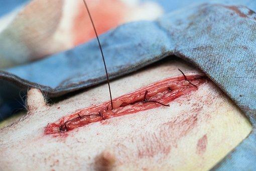 Canine Sterilization Surgery, Female Surgery