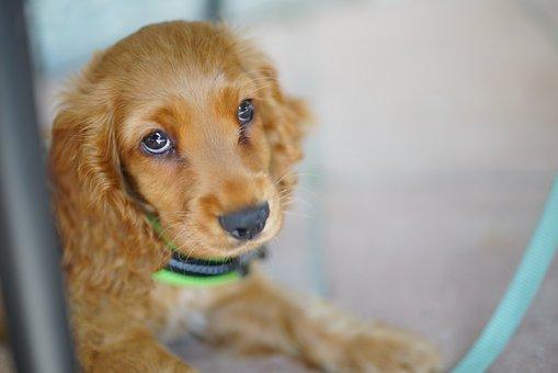 Dog, Cute, Pet, Animal, Happy, Animal Welfare