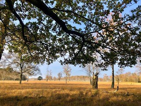 Duvenstedter Brook, Nature Reserve, Hamburg, Forest