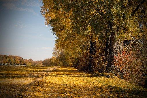 Autumn, Leaves, Leaf, Fall Foliage, Nature, Colorful