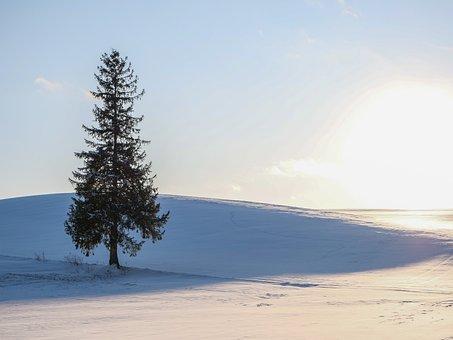 Winter, Snow, Hill, Natural, Landscape