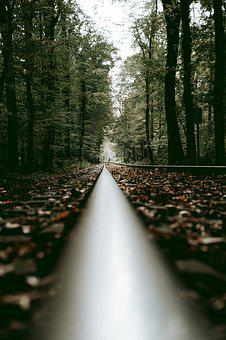 Tagstrees, Forest, Pathway, Leaves, Cologne, Germany