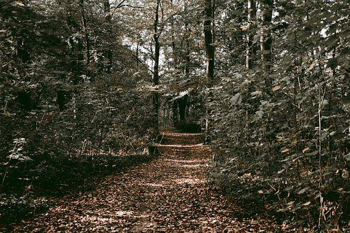 Trees, Forest, Pathway, Leaves, Cologne