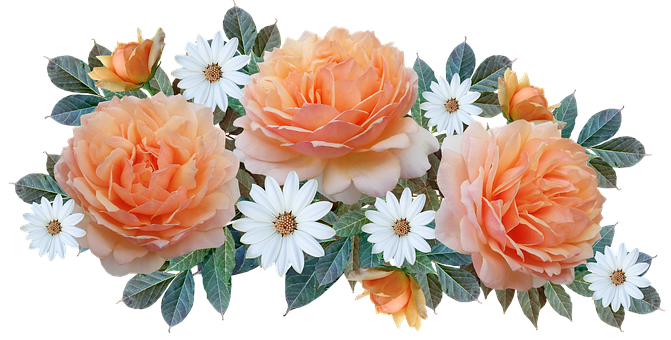 Flowers, Fragrant, Apricot, Roses, White Daisies