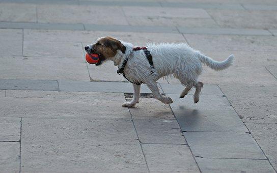 Dog, Pet, Canine, Fur, White, Brown, Leash, Running
