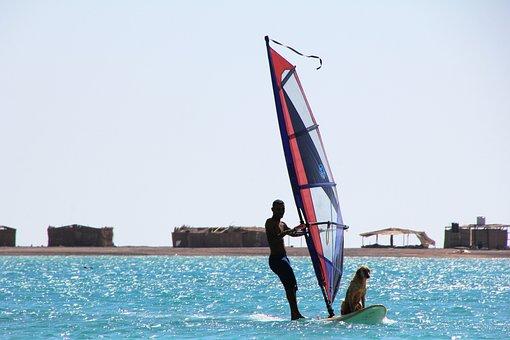 Surf, Dog, Water, Sea, Pet, Coast, Sand, Ocean, Animal