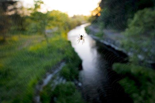 Spider Web, Spider, Nature, Arachnid