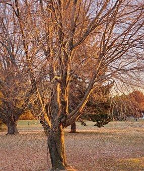 Sunlight, Trees, Scenery, Winter, Fall