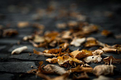 Autumn, Leaves, Forest, Nature, Colorful, Leaf, Tree
