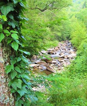Creek, Stream, Water, Nature, Ivy
