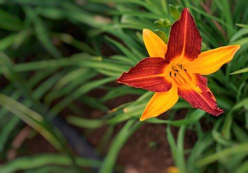 Flower, Nature, Kigali, Rwanda, Africa, Blossom, Bloom