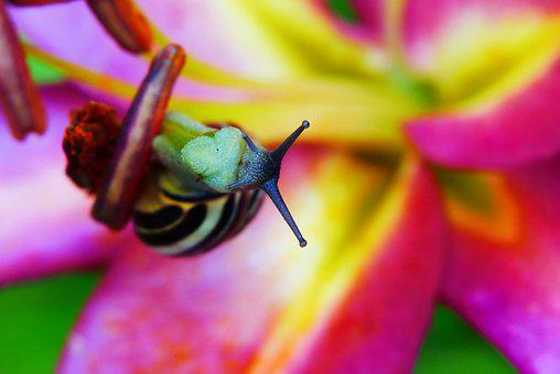 Wstężyk Huntsman, Snail, Flower, Lily, Bar, Macro, Near