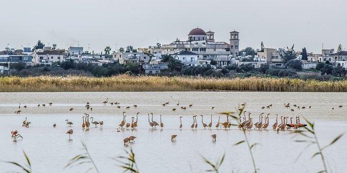Lake, Morning, Birds, Flamingo, Biotope