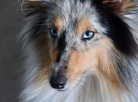 Dog, Bitch, Blue Eye Dog, Portrait, Next To Dog