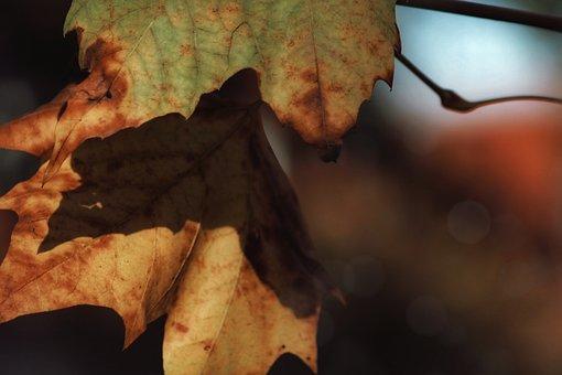 Autumn, Leaves, Gold, Close Up, Sun, Bill, Light
