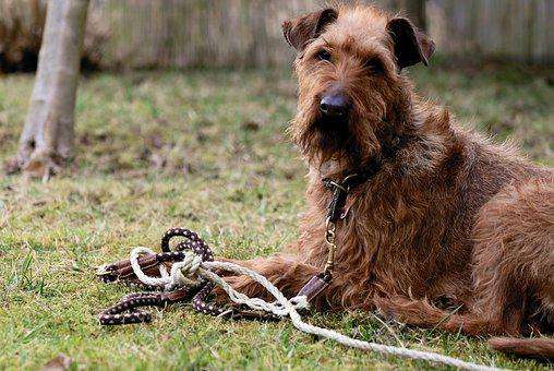 Connection, Leash, Connected, Rope, Dog