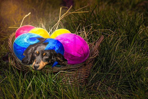 Easter Dog, Dog, Easter, Cute, Pet