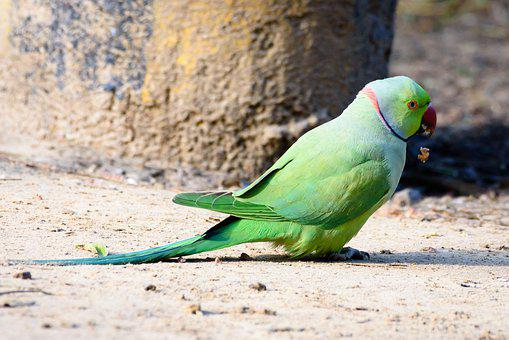 Bird, Parrot, Animal, Feather, Colorful, Plumage