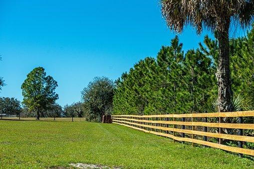 Fence, Rail, Farm, Green, Wood, Rustic