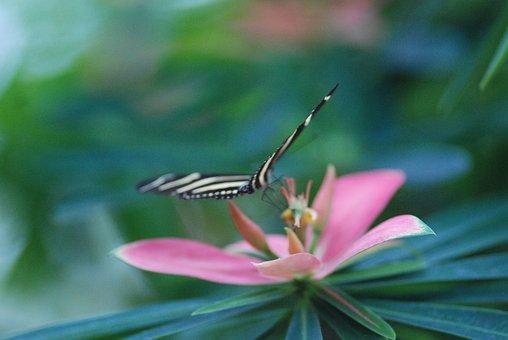 Butterfly, Butterfly And Flower, Flower, Lite, Glide