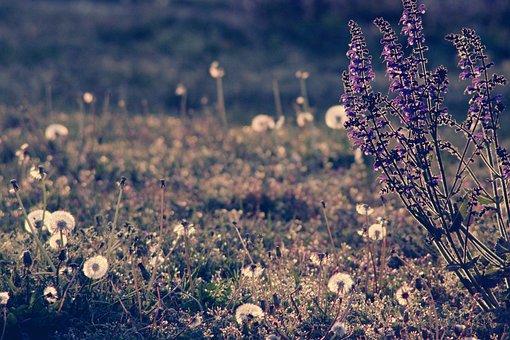 Flowers, Meadow, Abendstimmung, Summer