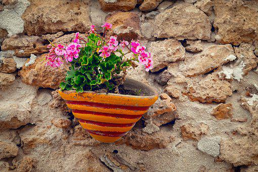 Still Life, Flowers, Flowerpot, Summer, Wall, Hauswand