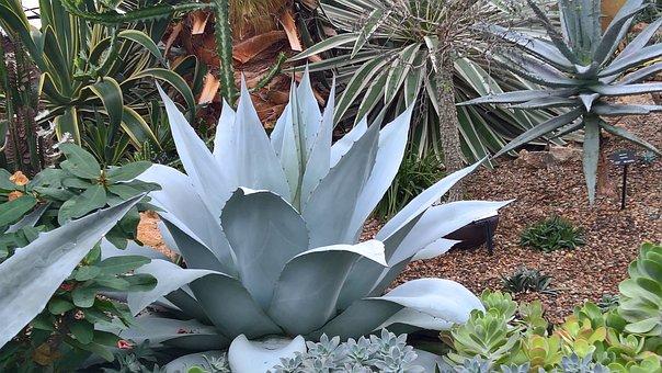 Nature, Plants, Botanical, Garden, Green