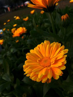 Flowers, Greenery, Green, Garden, Yellow, Orange