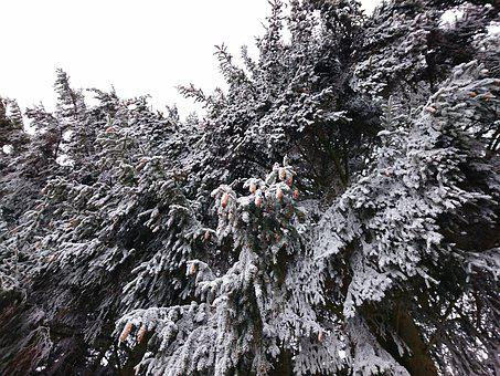 Winter, Cold, Snow, Ice, Frost, Nature, White, Frozen