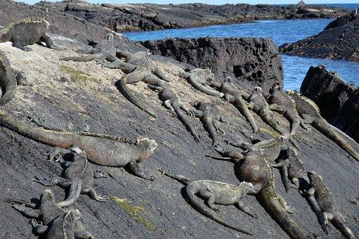Galápagos, Lava, Ecuador, Volcanic, Equator