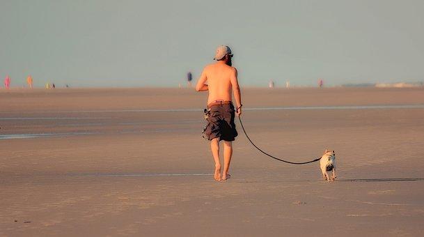 Dog, Leash, Man, Beach, Animal, Walking